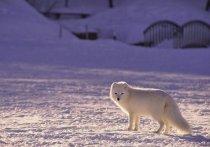 ПОРА поддерживает проект «Чистая Арктика»