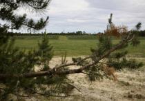 Тема рекультивации загрязненных земель приобрела небывалый размах