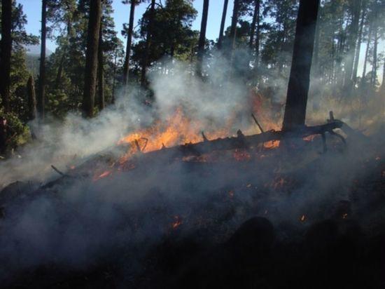 В лесном массиве в Тверской области загорелась подстилка