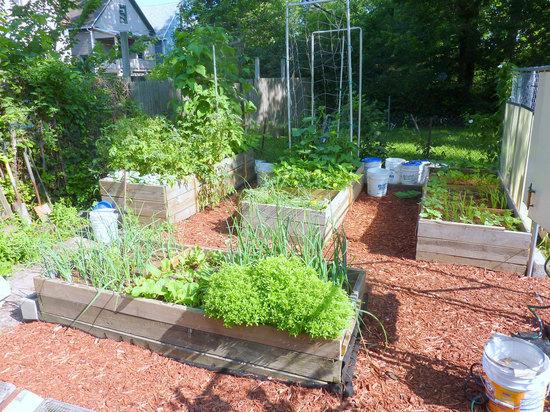 Садоводы указали на 5 быстрорастущих овощей для посадки в июле