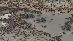 После проливных дождей в Анапе началось нашествие комаров: видео