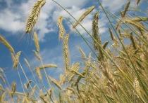 """Украинский политолог Вадим Карасев посетовал на то, что """"зерновое проклятье"""" страны и открытие рынка земли приведет к сокращению численности украинцев"""