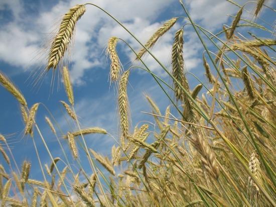 Эксперт считает, что на Украине будут производить исключительно зерно