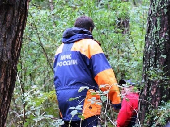 В алтайском МЧС рассказали, как не заблудиться в лесу