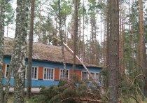 Жители Псковской области могут получить компенсацию ущерба в связи с ураганом