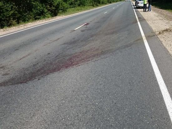 В Марий Эл автомобиль сбил лося и скрылся с места аварии