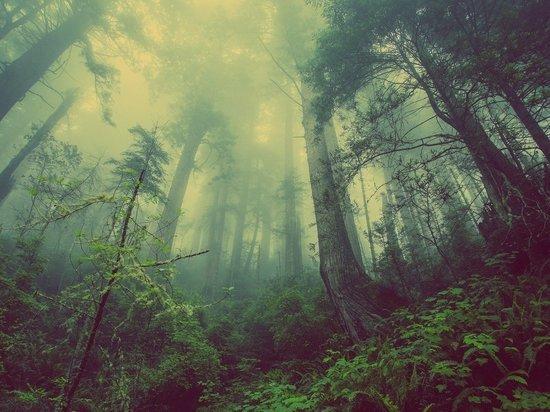 На Алтае спасли сельчанку, заплутавшую в лесу