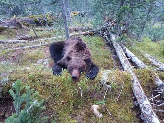 Медведь загрыз 16-летнего волонтера: проводники рассказали подробности трагедии