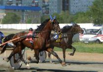 В Омске на этапе конного «Большого Сибирского круга» разыграют более 1 млн рублей