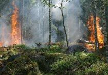 Псковская область получит более 6,7 млн рублей на охрану лесов от пожара