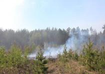 Тюменцам запретили посещать леса до конца июля