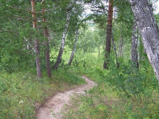 Томский губернатор призвал жителей беречь лес от пожаров