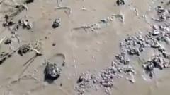 Нефтепродукты в посёлке Красные Баррикады заполонили берег