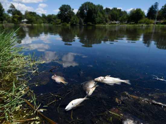Стало известно, что привело к гибели рыбы в районе пляжа «Здоровье» на реке Сейм в Курске