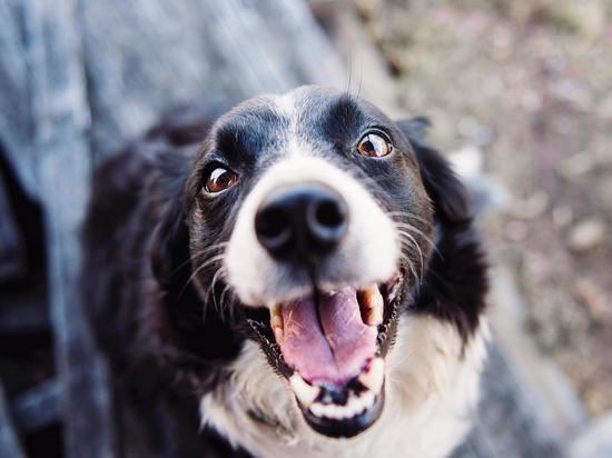 Потерявший собаку житель Марий Эл едва не отдал деньги аферисту
