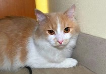 В аэропорту Екатеринбурга пассажирка бросила своего домашнего кота, когда на стойке регистрации ей сообщили, что для животного тоже требуются документы