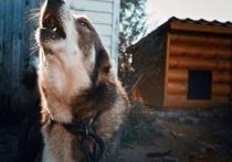Калужская область выдвинет закон об ограничении допустимого числа животных в домах