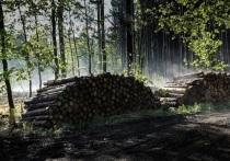 В Калужской области незаконно вырублены ели и березы на 5,5 млн рублей