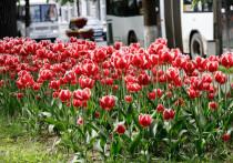 Более 3000 зараженных вредителем цветов уничтожат в Псковской области