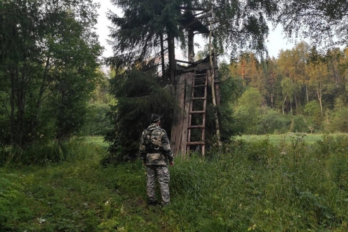 Хорошие новости: пропавшего в Костромском районе дедушку нашли в охотничьем шалаше