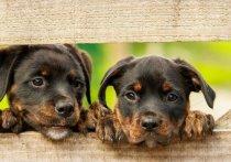 В Калуге прорабатывают закон о предельном числе собак, разрешенных к содержанию