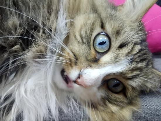 В Кирове предлагают привить даже кошек