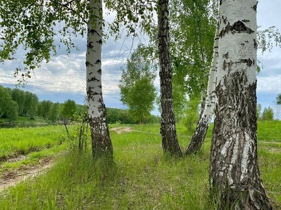 На Куликовом поле пройдет творческий конкурс «Цветет ковыль!»