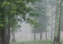 Экологическая тропа Серпухова вошла в топ лучших троп Подмосковья