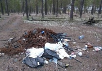 После вмешательства прокурора 5 лесных свалок убрали в Муравленко