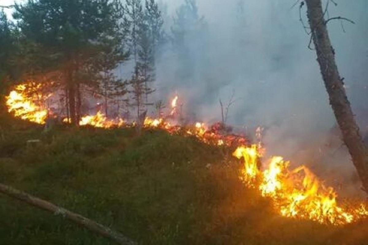 В Макарьевском районе Костромской области из-за лесных пожаров введен режим ЧС
