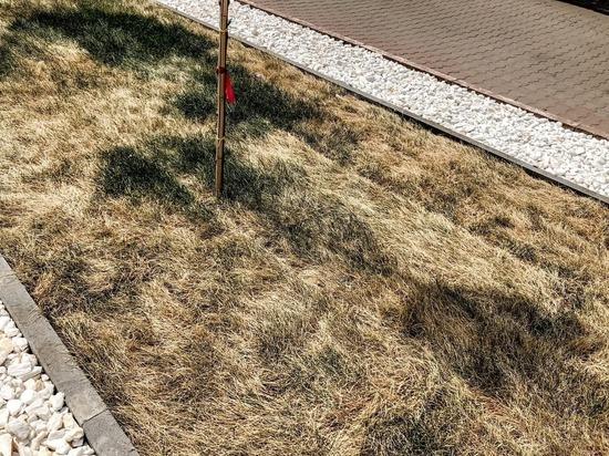 В центре Курска испорчен рулонный газон