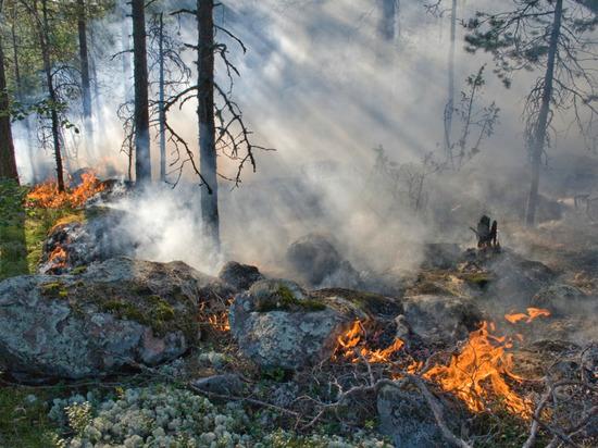 На Ладоге из-за пожаров заговорили о сводках с фронта