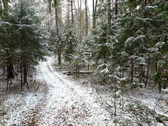 Житель Марий Эл организовал незаконную рубку леса почти на 2 млн рублей
