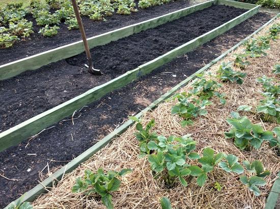 Какие овощи лучше сажать вместе на грядке: советы садоводов