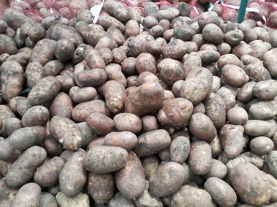 Самые высокие цены на картофель – в саратовских сетевых магазинах