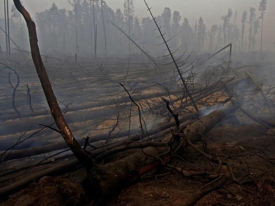 Жителей Подмосковья предупредили о высокой пожароопасности