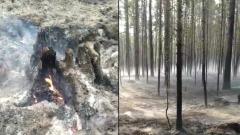 Окрестности Кудамы в Карелии местами превратились в пепелище