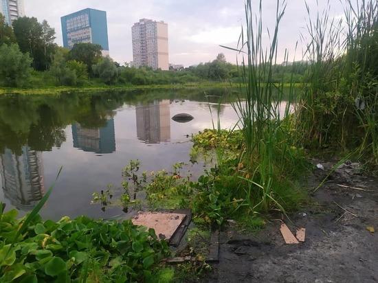 Общественники пытаются спасти озеро с дикими утками в Барнауле