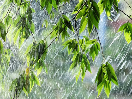 Костромичам опять обещают дожди и грозы