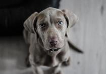 Собака без документов не смогла пройти границу в Псковской области