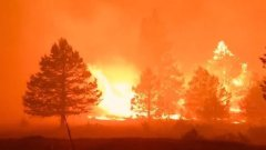 На западе США горят 470 тысяч гектров леса: видео