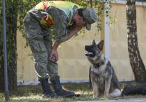 В военном деле давным-давно нашли применение собакам