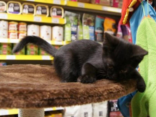 В российских магазинах решили запретить продажу собак и кошек