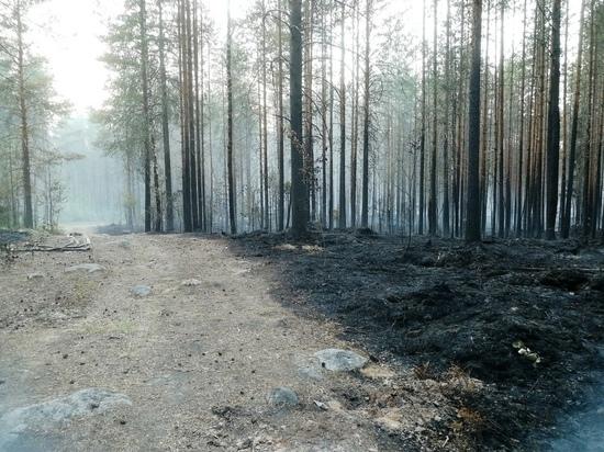 Жители посёлка Найстенъярви опубликовали обращения к властям из-за пожаров
