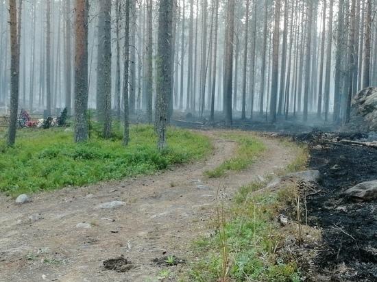 Рослесхоз поручил Карелии нарастить численность лесопожарных группировок