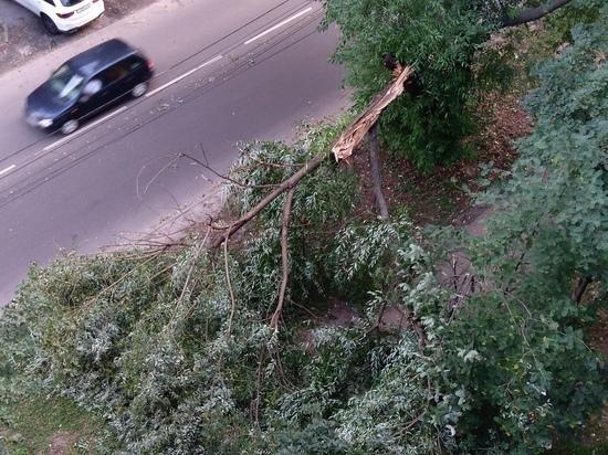 В Курске деревья падают на машины и провода из-за сильного ветра