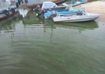 Зеленые разводы в реке напугали жителей Салехарда