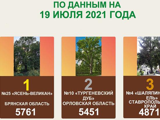 Брянский «ясень-великан» лидирует в конкурсе «Российское дерево года 2021»