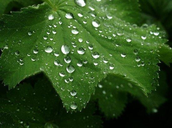 Несмотря на жару, дожди нагрянут в Приамурье 21 июля