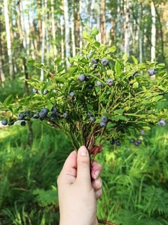 О своих находках и излюбленных местах сбора ягод и грибов тамбовчане рассказали «МК в Тамбове»